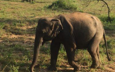 O slonu